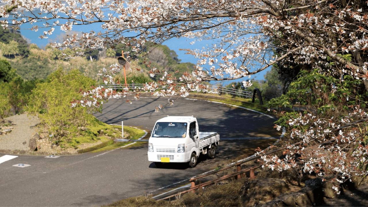 軽トラックと桜